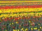 image/kanepyon-2006-04-15T22:46:36-1.jpg