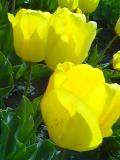 image/kanepyon-2006-04-15T22:46:36-3.jpg