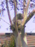 image/kanepyon-2006-04-09T18:43:20-1.jpg